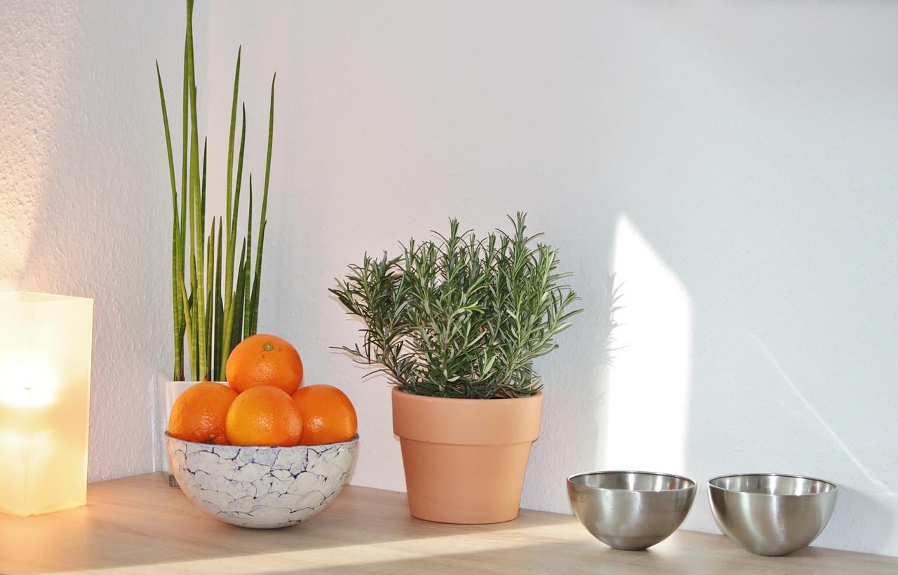 Czym doświetlić rośliny w okresie zimowym