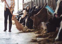 Karmienie zwierząt hodowlanych